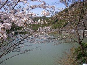 simanose2009.3.21.JPG