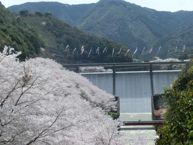 2014.4.1sakura-2.JPG
