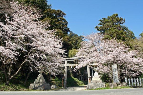 sakura2011.4.4-1.JPG