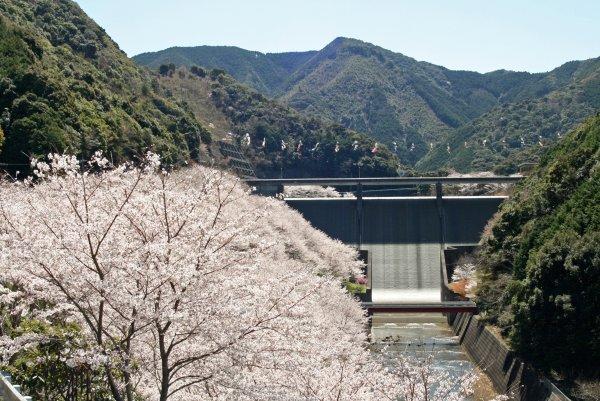 sakura2011.4.4-2.JPG